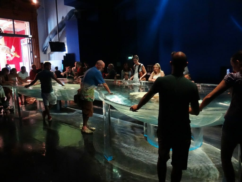 Alistair gets up close and personal with sharks in an open pool